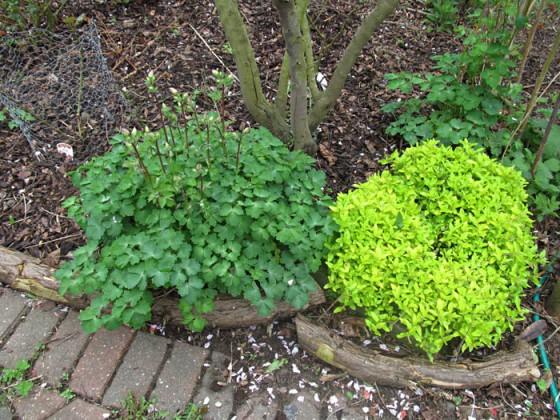 Plants 6